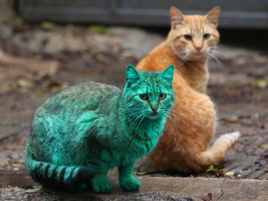 green-cat-5
